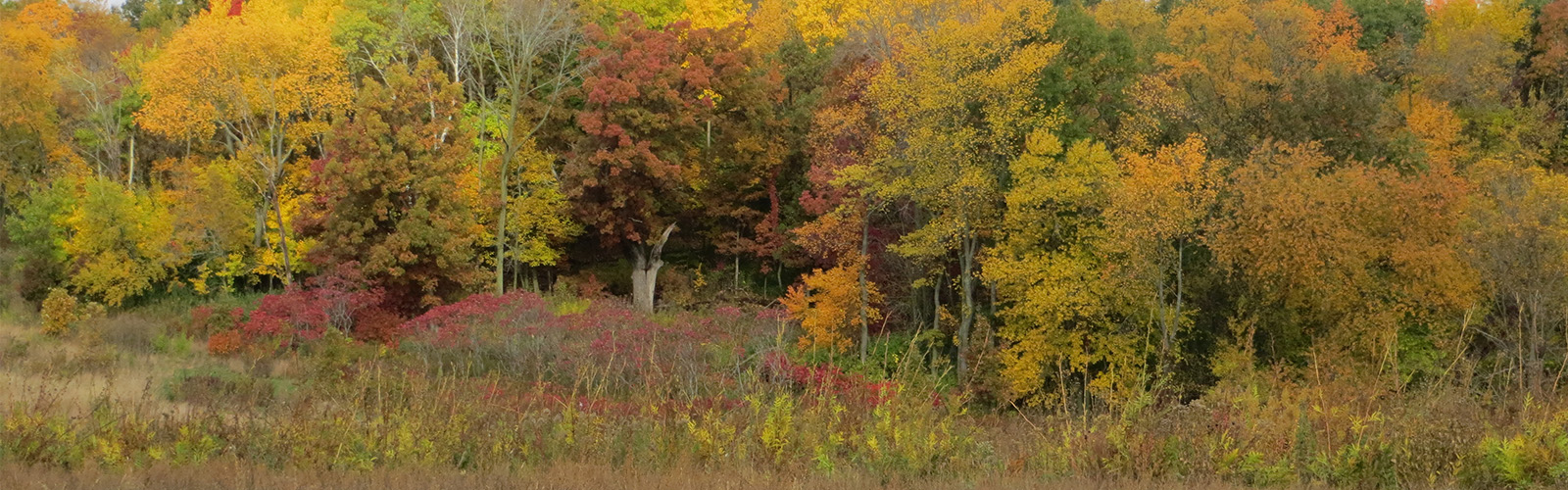 Woodland meets prairie with both in fall colors of red, orange, and yellow.
