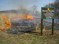 "A prescribed fire lights the tall dry prairie grass on fire behind a wooden sign that reads, ""Biocore Prairie""."